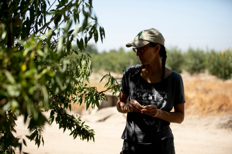 Almond farmer Christine Gemperle shells an almond freshly picked from a tree in her grove in Ceres on Aug. 26, 2021. Gemperle has experimented with new irrigation systems and different breeds of almonds to counteract her dry, salty land. Photo by Anne Wernikoff, CalMatters