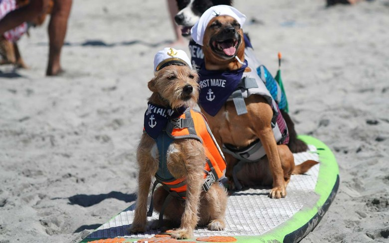 Two dogs dressed as a ship captain and first mate join the freestyle heat of the Surf Dog Surf-a-thon in Del Mar. Photo by Chris Stone