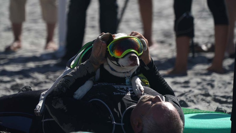 Faith, an American pit bull terrier, the bulldog and her owner, James Wall, share a quiet moment before the surf competition. Photo by Chris Stone